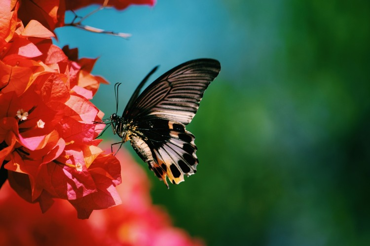 butterfly-2789034_1280